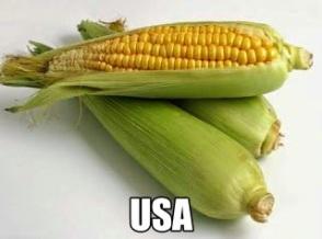 the maize food